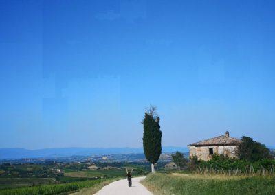 wine tour ebike experience argiano