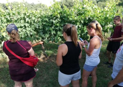wine tour ebike experience molinaccio